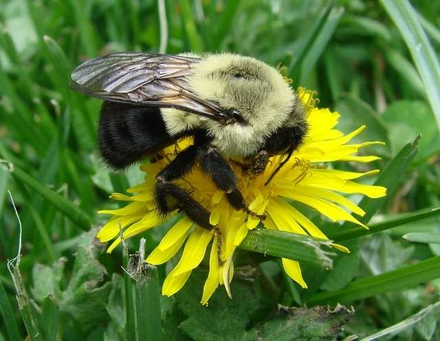 Social bees have kept their gut microbes for 80 million years