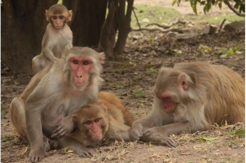 Social ties help animals live longer