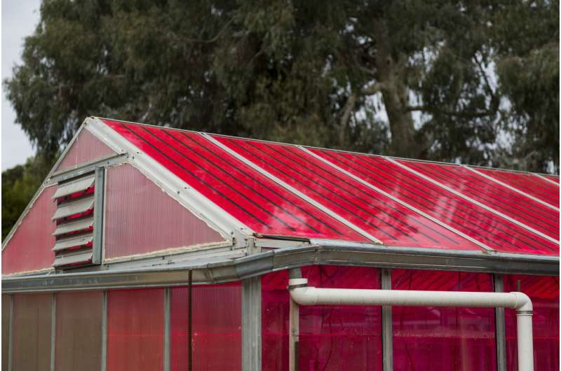 Solar greenhouses generate electricity and grow healthy crops