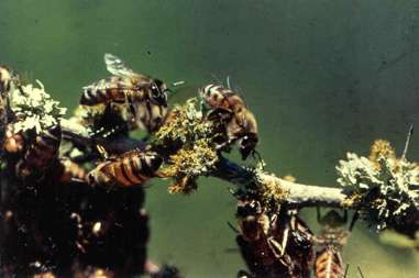 South Central Texas residents bewildered by recent bee behavior