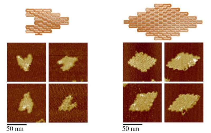 Spaghetti-like, DNA 'noodle origami' the new shape of things to come for nanotechnology