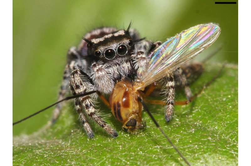Spiders eat 400-800 million tons of prey every year