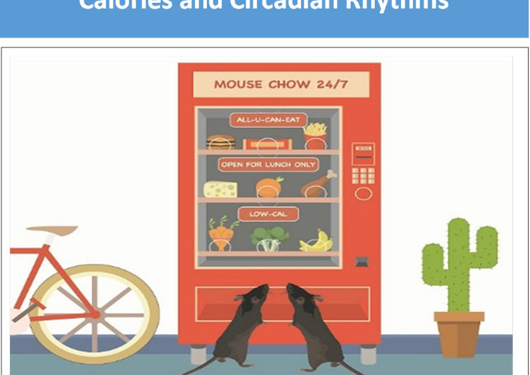 Study: Eating at 'wrong time' affects body weight, circadian rhythms