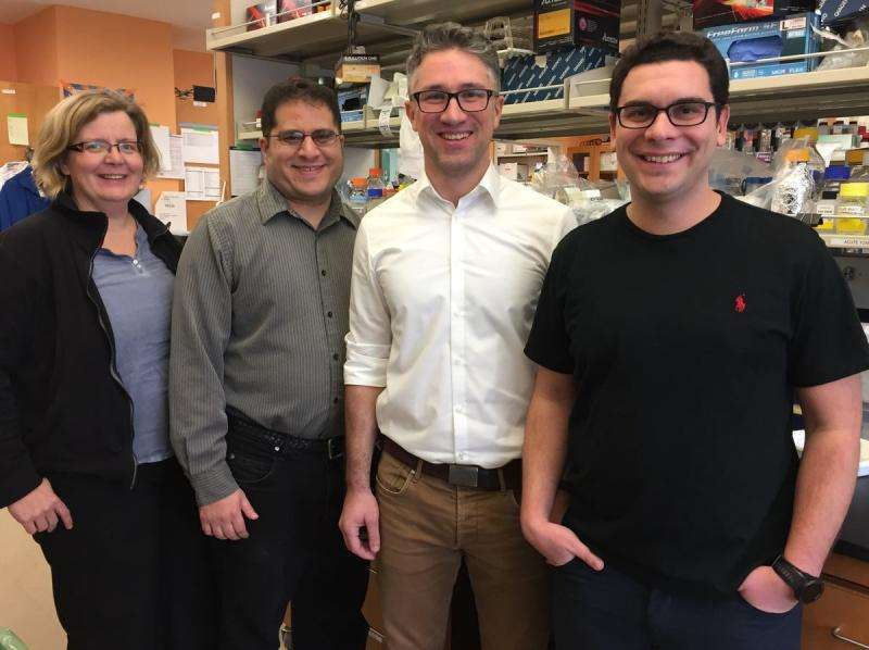 Study pinpoints how skin cells' identity can be disassembled to create stem cells