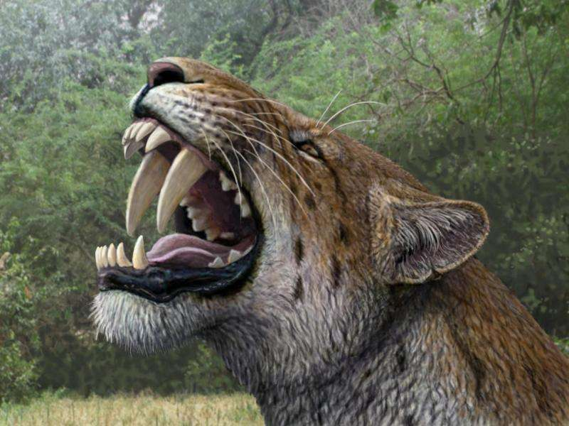 Successful dig reveals a nearly complete saber-toothed cat skull