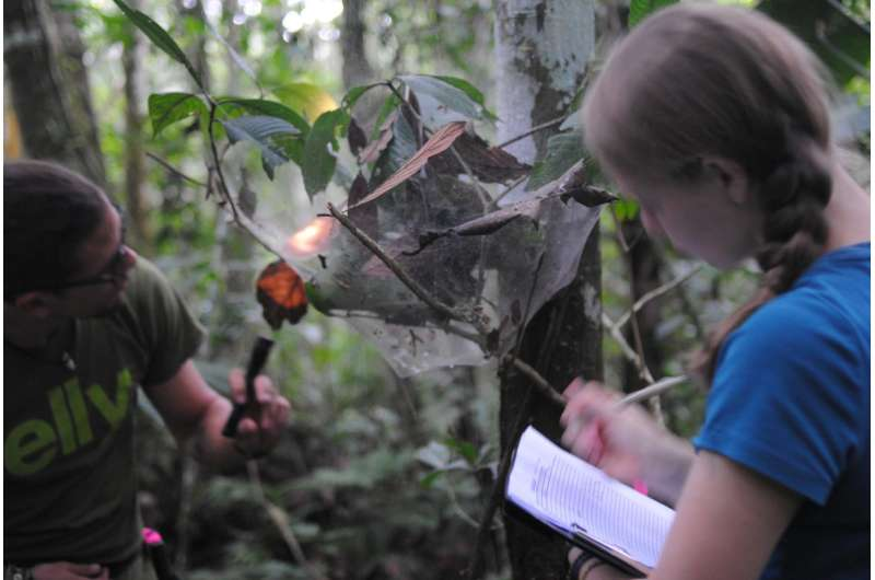Survival instinct, not family bonds, weave massive spider colonies together