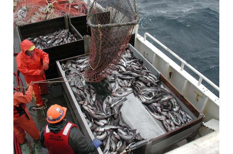 Swedish researchers and global fishing companies form coalition for sustainable seas