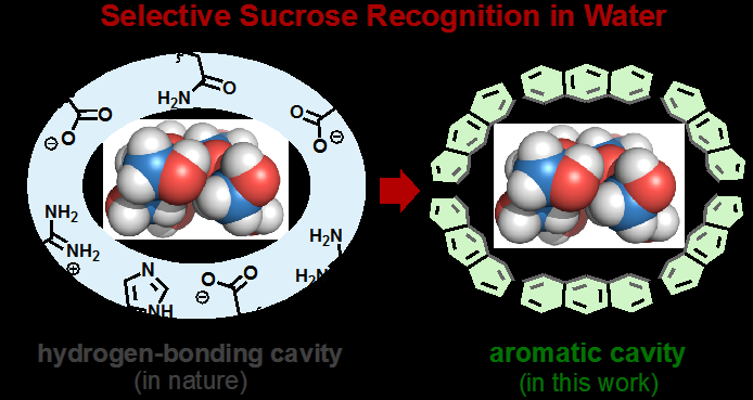 Sweet success: Nanocapsule perfectly binds sucrose in water