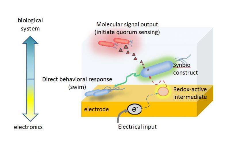 System Holds Promise for Study of Biological Systems, Biosensors and Bio-hybrid Devices