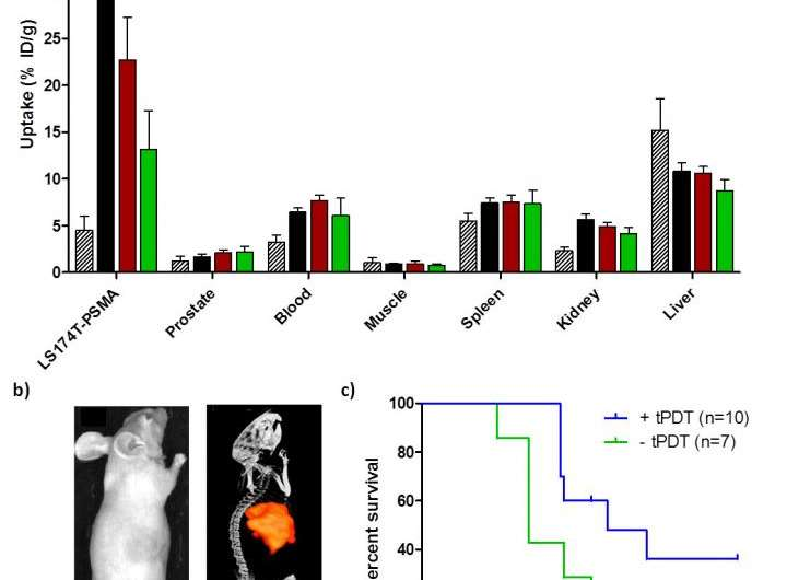 Targeted photodynamic therapy shown highly effective against prostate cancer