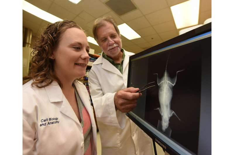 Tears in tiny bone cells called osteocytes appear an important step to better bones
