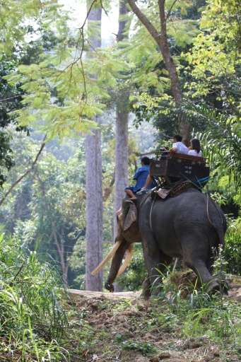 Thailand has more elephants in captivity than living in the wild.