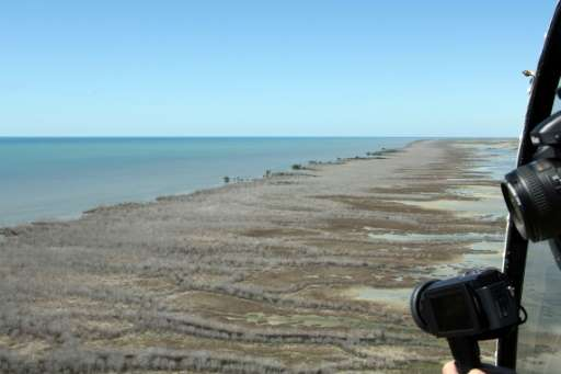 The 7,400 hectare die-back of mangroves in Australia's Gulf of Carpentaria has been confirmed by aerial and satellite surveys