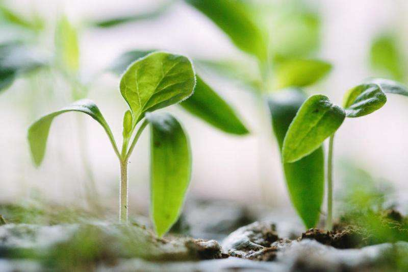 The conversation between plants and soil
