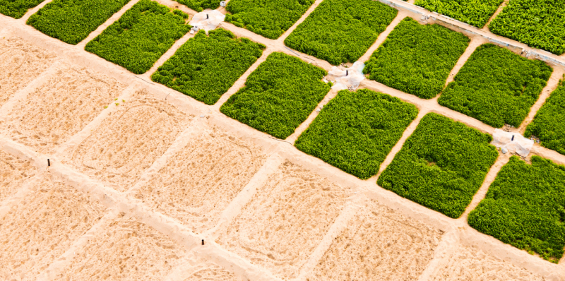The cooling effect of agricultural irrigation