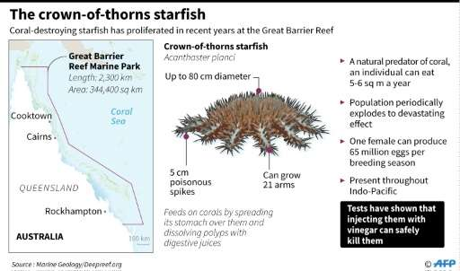 The crown-of-thorns starfish