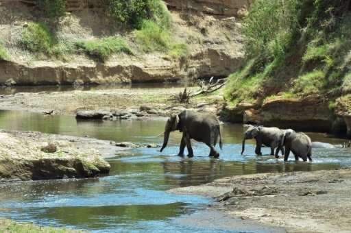 The elephant population is stable or increasing in east and southern Africa but poaching remains high in the centre of the conti