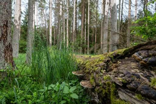 The EU is concerned that logging in Poland's Bialowieza forest will cause irreparable loss of biodiversity