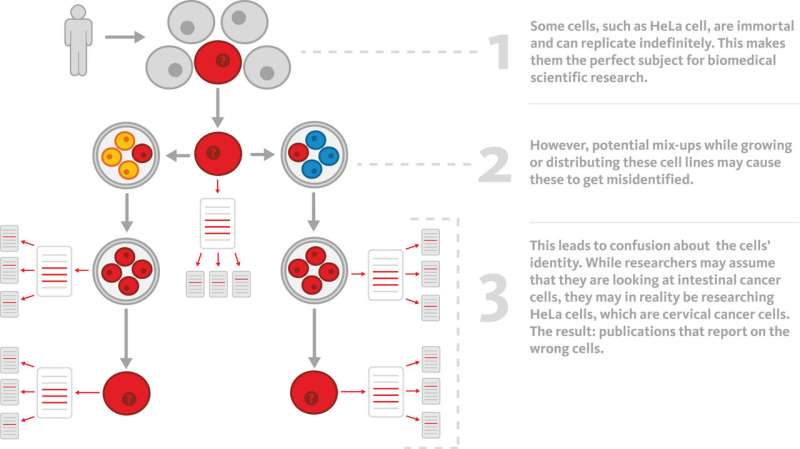 The ghosts of HeLa: How cell line misidentification contaminates the scientific literature