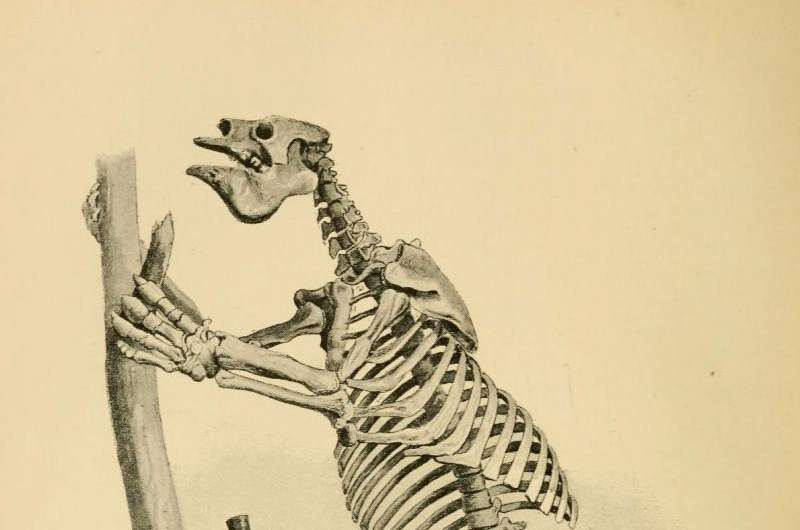 The giant sloth megatherium was a vegetarian