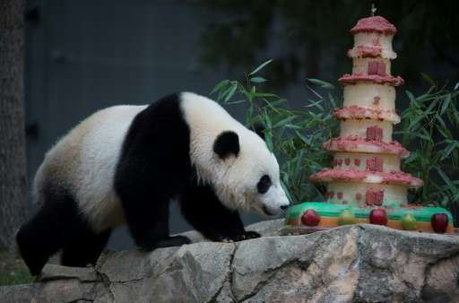 The National Zoo's giant panda Bao Bao will stay in quarantine for about a month, before entering Chengdu's special breeding pro