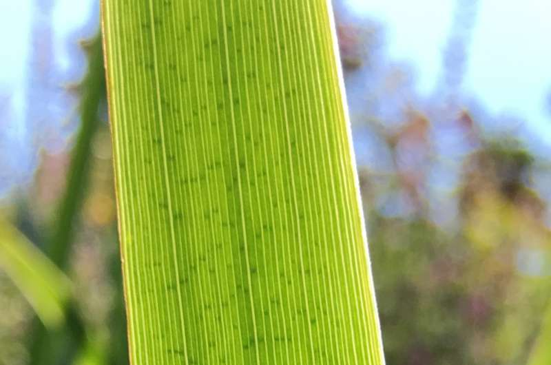 The origin of the chloroplast