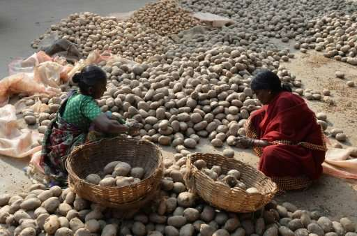 The potato was selected for the study because it can be grown in many types of soil, in different climates and is resistant to &