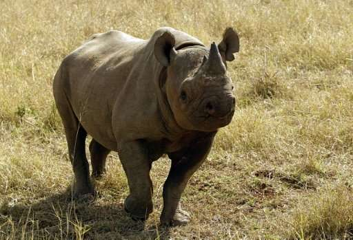 There are around 5,000 black rhino left in Africa with South Africa's population sitting at 1,893, according to the Internationa
