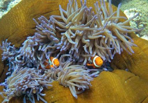 The reef contributes billions of dollars to the Australian economy through tourism, fishing, and scientific research