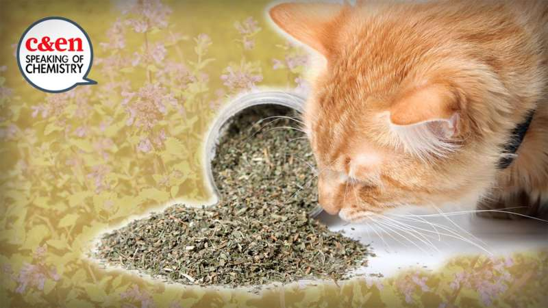 The truth about catnip (video)