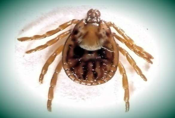 Tick-borne disease research receives global boost