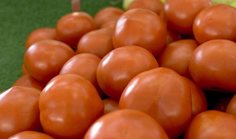 Tomatoes' crystal ball reveals evolutionary secrets