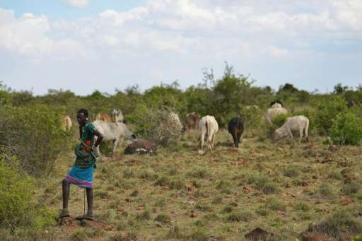 Too many people with too much livestock have rendered Laikipia's rangeland unliveable for the growing population, exacerbated by