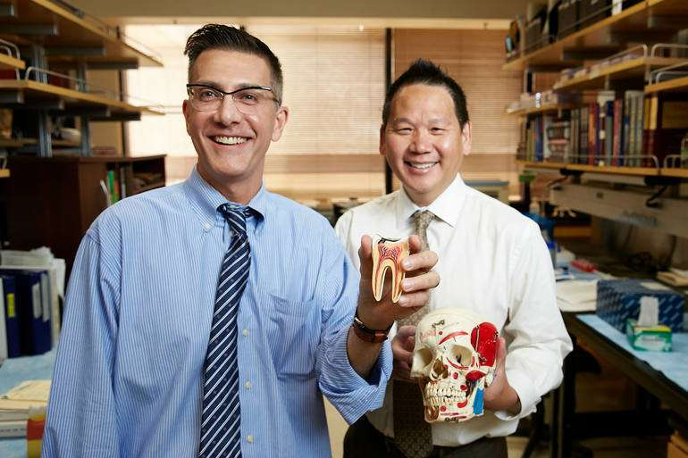 Tooth root pulp becomes rich source of stem cells