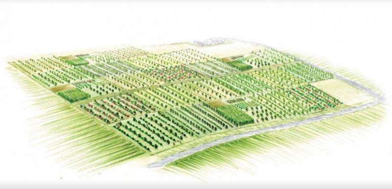 Trees and shrubs offer new food crops to diversify the farm