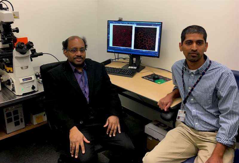 Trigger for most common form of vision loss discovered