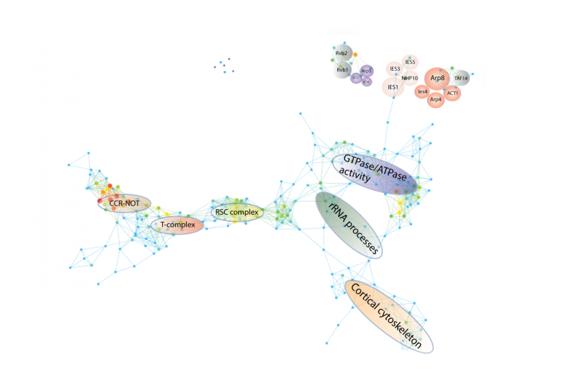 Uncovering new relationships and organizational principles in protein interaction networks