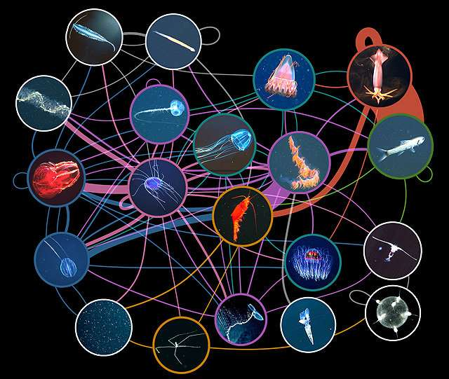 Unique field survey yields first big-picture view of deep-sea food webs