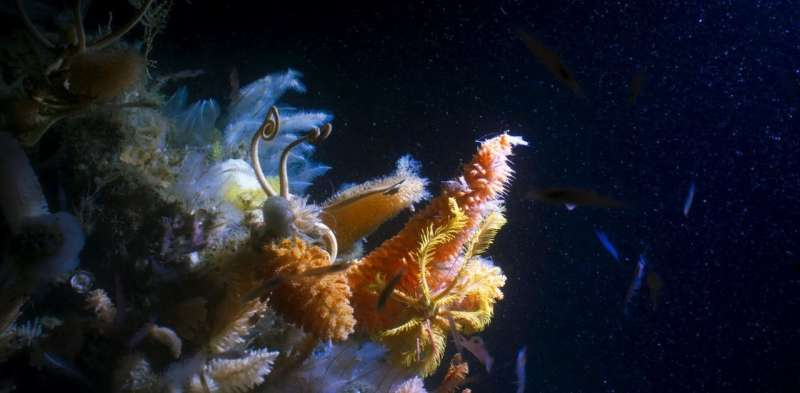 Unless we regain our historic awe of the deep ocean, it will be plundered