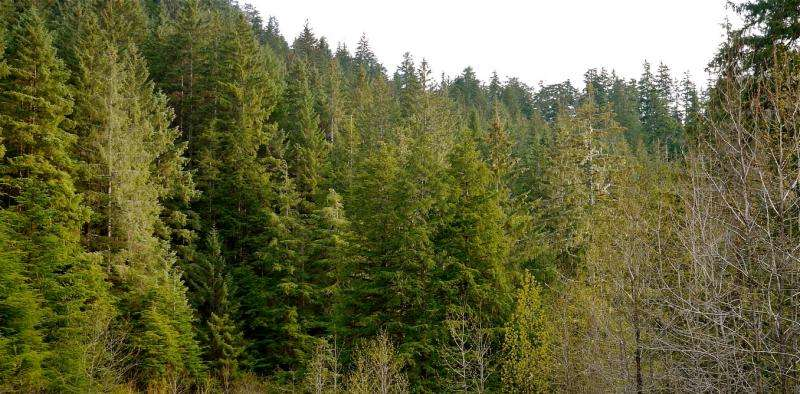 Using forests to manage carbon—a heated debate
