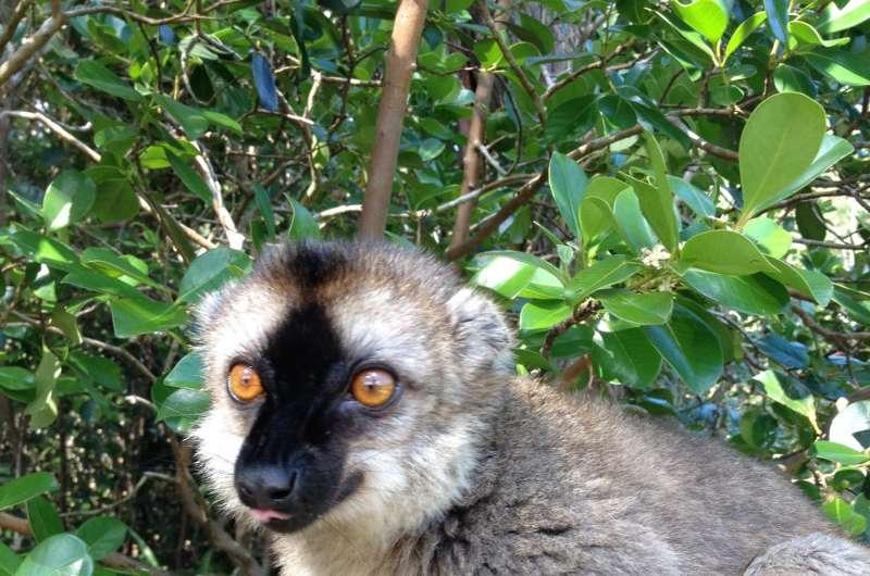 Using science to combat illegal wildlife trade