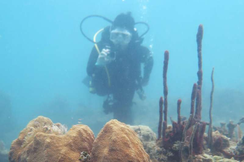 UTA quantifying coral species' disease susceptibility by examining immune traits
