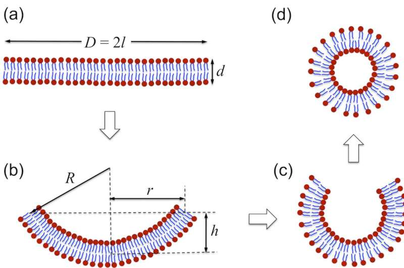 Vesicle formation findings could pave way for liquid biopsies, drug delivery devices