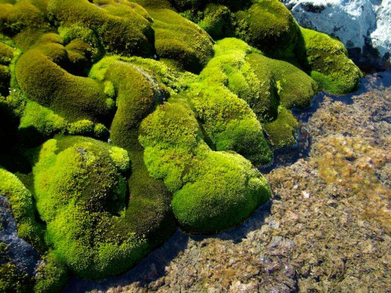 Video: Drones help scientists check the health of Antarctic mosses, revealing climate change clues