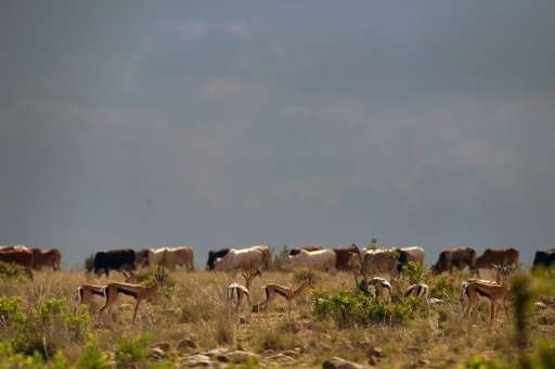 Violence has spiked in Laikipia this year, with smallholder farms and huge ranches alike invaded by armed herders.