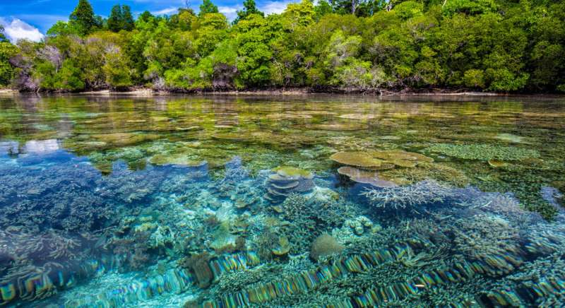 'Visionary' project to save the Belize coast provides valuable framework