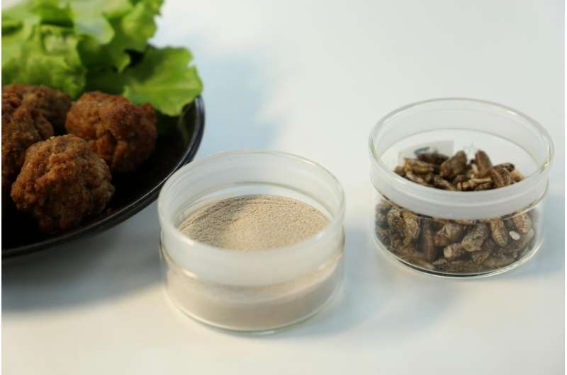 VTT develops raw materials for meatballs and falafel from mealworms and crickets
