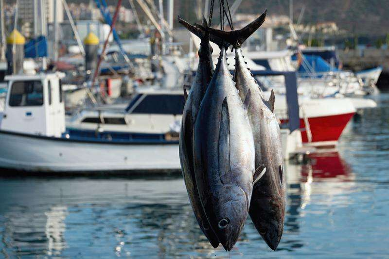Want to eat fish that's truly good for you? Here are some guidelines to reeling one in