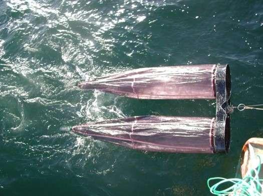 Warm Northwest waters draw spawning fish north