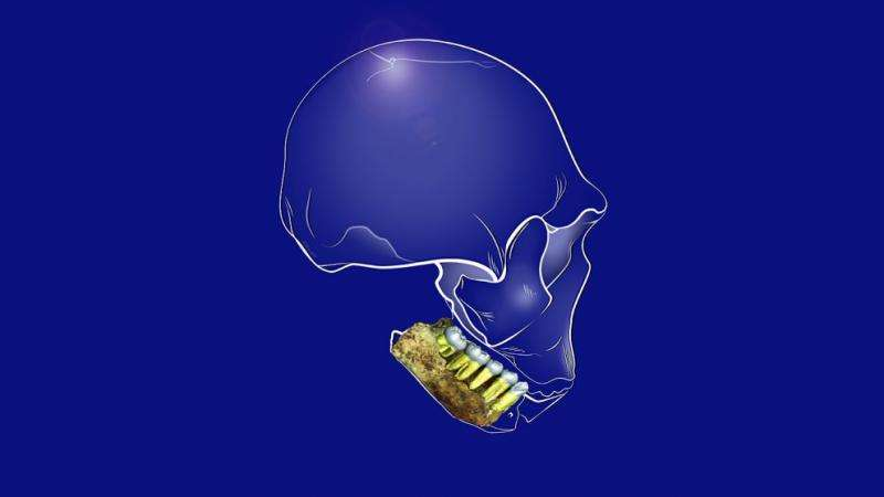 What dental remains from Homo naledi can tell us